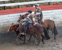 Chilean huasos in rodeo championship. Chilean huasos compete in rodeo championship Royalty Free Stock Images