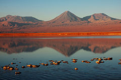 Chilean lagoon with volcano on the back Royalty Free Stock Photo
