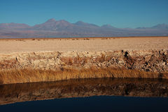 Chilean lagoon with volcano on the back Royalty Free Stock Photos