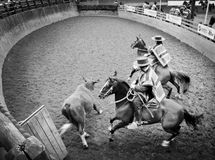 Chilean Rodeo - The  Stock Photos