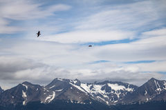 Chilean Skua Birds flying over Mountains in Beagle Channel - Ushuaia, Tierra del Fuego, Argentina Royalty Free Stock Photo