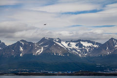 Chilean Skua Birds flying over Mountains in Beagle Channel - Ushuaia, Tierra del Fuego, Argentina Royalty Free Stock Image