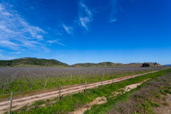 Chilean Vineyard at the end of winter Royalty Free Stock Photo