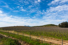 Chilean Vineyard at the end of winter. Chilean Vineyards in Rapel valley on a sunny day at the end of winter Stock Image
