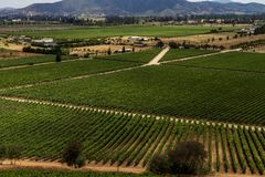 Chilean vineyard panorama royalty free stock images