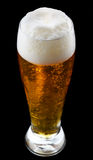 chiled的啤酒 库存照片