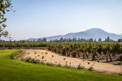 Chileense Wijngaard - Santiago, Chili royalty-vrije stock foto