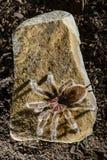 Chilenischer rosa Tarantel auf einem dunklen Hintergrund des Felsens lizenzfreies stockfoto