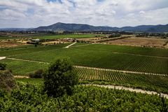 Chilensk vingårdpanorama royaltyfri foto