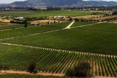 Chilensk vingårdpanorama royaltyfria bilder