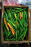 chiles Fotografía de archivo libre de regalías