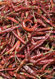 Chiles de Arbol. Hundreds of scattered red chili's Royalty Free Stock Photo
