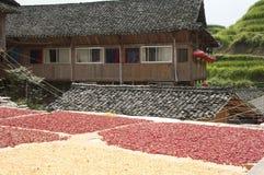 Chiles de sequía de Sun foto de archivo libre de regalías