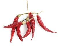 Chiles rojos. Fotografía de archivo libre de regalías