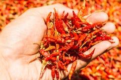 Chiles rojos calientes y picantes a mano, chile rojo secado, pimienta, chiles como fondo para la venta en un mercado local de la  Foto de archivo libre de regalías