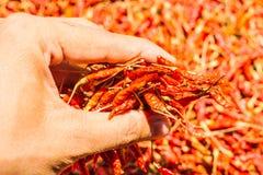 Chiles rojos calientes y picantes a mano, chile rojo secado, pimienta, chiles como fondo para la venta en un mercado local de la  Foto de archivo