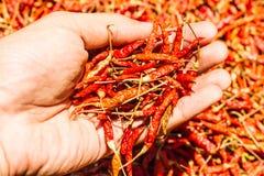 Chiles rojos calientes y picantes a mano, chile rojo secado, pimienta, chiles como fondo para la venta en un mercado local de la  Imagen de archivo