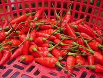 Chiles rojos en busket Imagenes de archivo