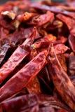 Chiles rojos secados Fotografía de archivo libre de regalías