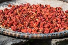 Chiles rojos secos Foto de archivo libre de regalías