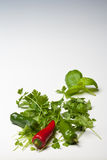Chiles rojos y verdes con perejil y albahaca fotografía de archivo