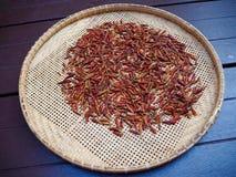 Chiles secados en cesta de trilla Imagen de archivo libre de regalías