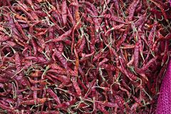 Chiles secados rojo Imagenes de archivo