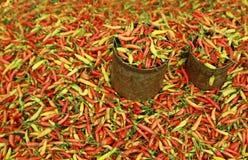 chili горячий Стоковая Фотография RF