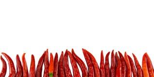 Chili на белой предпосылке стоковая фотография