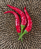 Chili & солнцецвет Стоковое Изображение RF