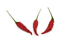 chili сухой Стоковое Фото