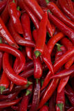 Chili. Pile of chili peppers Royalty Free Stock Photos