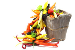 Chili. A lot of bell peppers Stock Photography