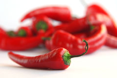 Chili. Red hot chili peppers on white background royalty free stock image