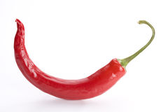 Chili. Single red hot chili pepper on white background Royalty Free Stock Photos