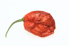 Chili Bhut-Jolokia Stock Images