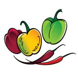 Chili and Bulgarian Peppers Royalty Free Stock Images