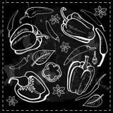 Chili chili, peppargrönsaker Vektor Illustrationer