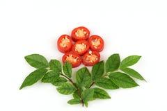 Chili, Chili pieprz, Czerwoni Chillies na białym tle zdjęcie royalty free