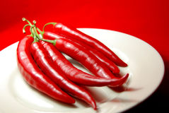 Chili (chilli, chilly) Royalty Free Stock Image