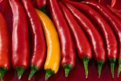 chili colorfull gorący pieprz Zdjęcie Stock