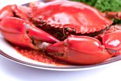 Chili Crab Photographie stock libre de droits