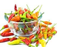 Chili czerwony pieprz Fotografia Stock