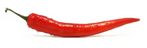 Chili czerwony pieprz Obrazy Royalty Free
