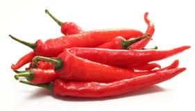 Chili czerwony pieprz Zdjęcie Royalty Free