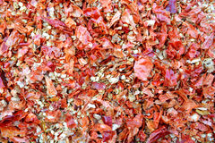 Chili Flakes caldo asciutto Fotografia Stock Libera da Diritti