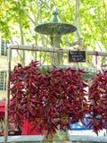 Chili fontanna zdjęcia royalty free