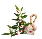 Chili and garlic Stock Image
