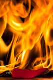 chili gorącego pieprzu czerwień Fotografia Stock