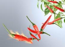 Chili gorący pieprz Obrazy Stock